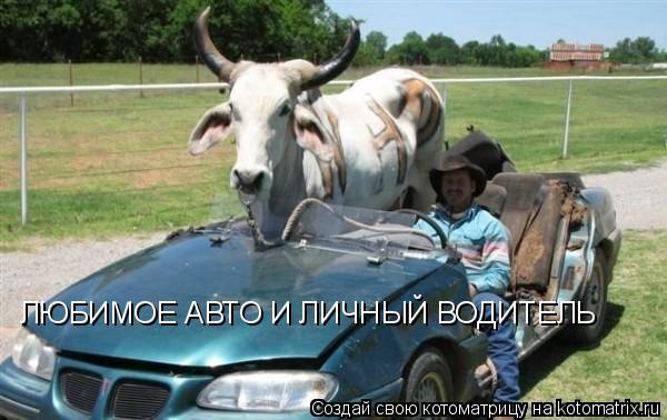 Любимое авто и личный водитель
