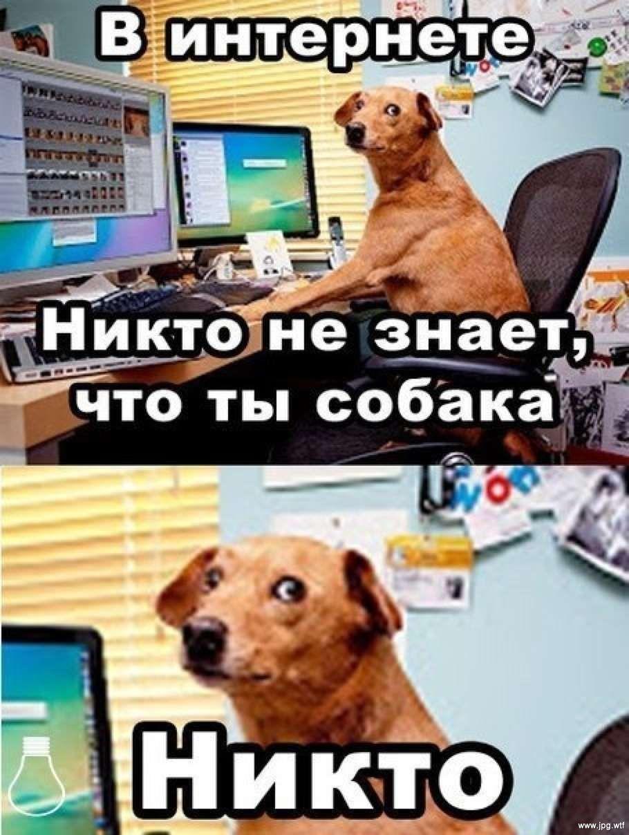 В интернете никто не знает, что ты собака. Никто.