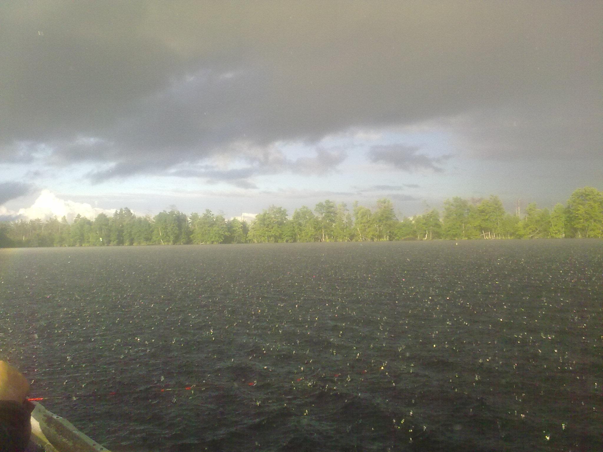 Грибной дождь на Чудском озере (Рдейский заповедник)