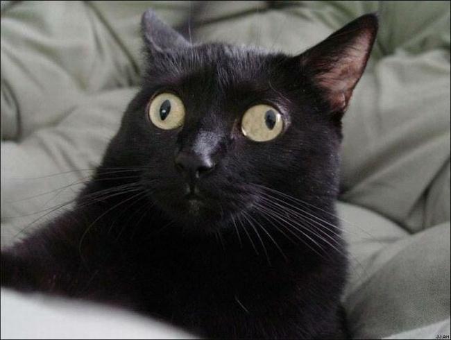 Специфическая кошка