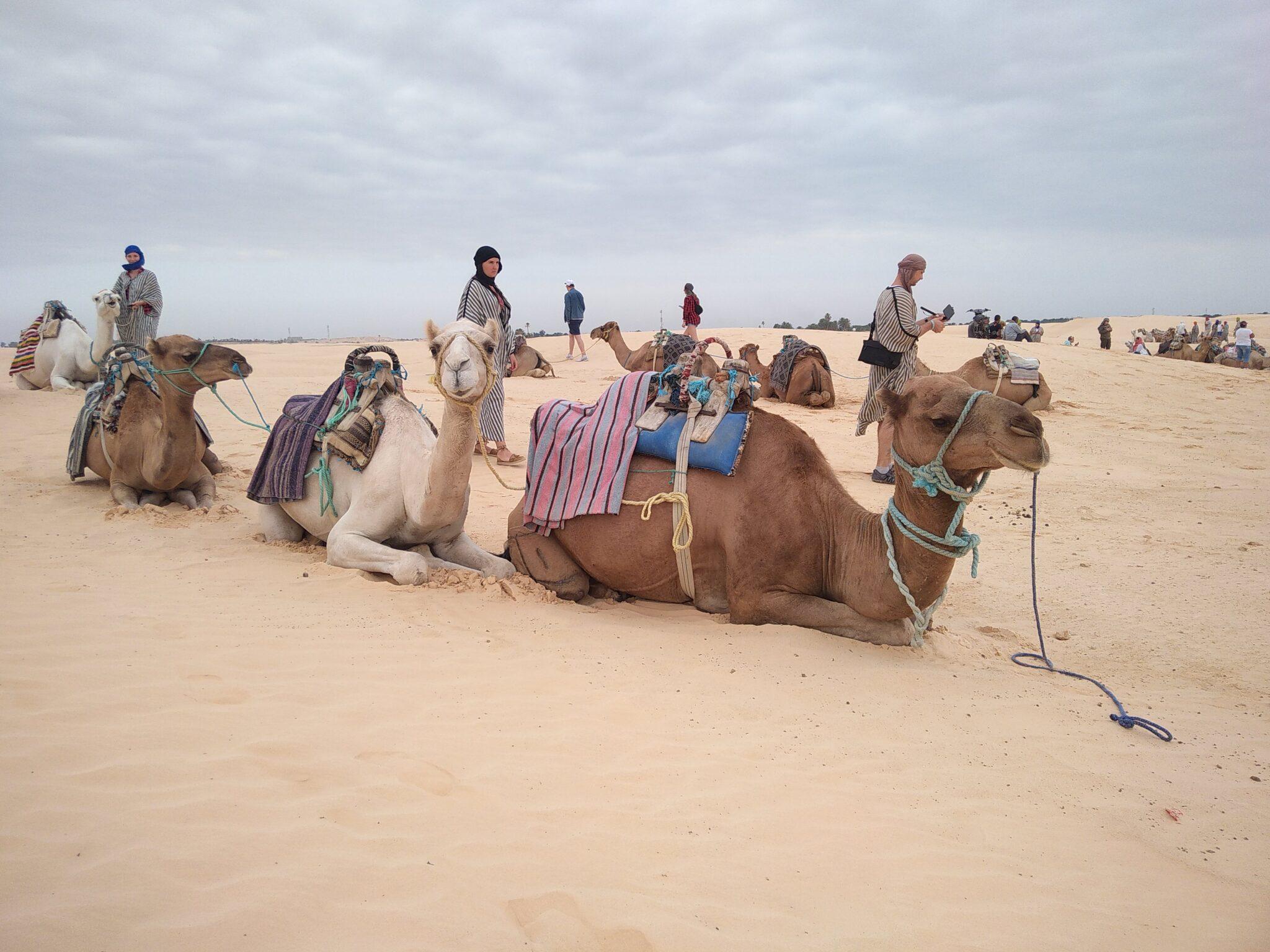 Тунис, Сахара, красота